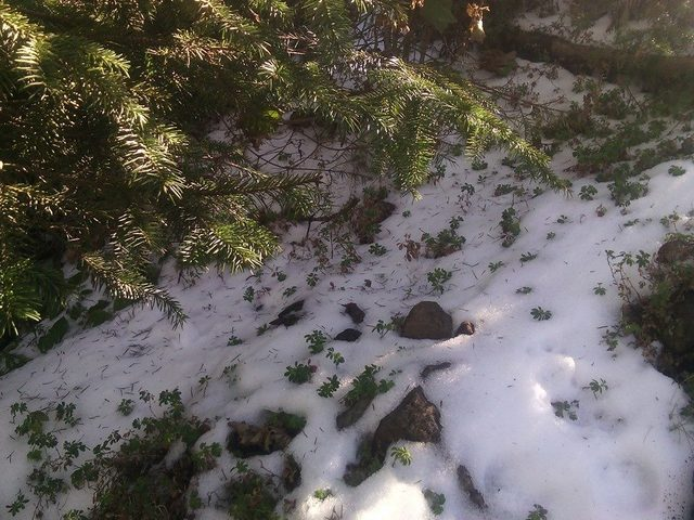 Una vista mas cercana de la nieve
