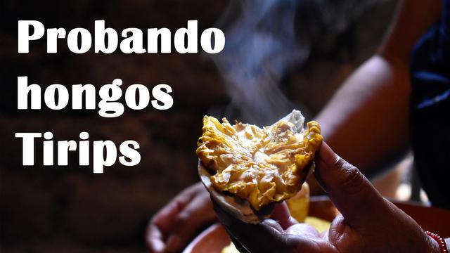 Probando hongos Tirips asados en Patamban