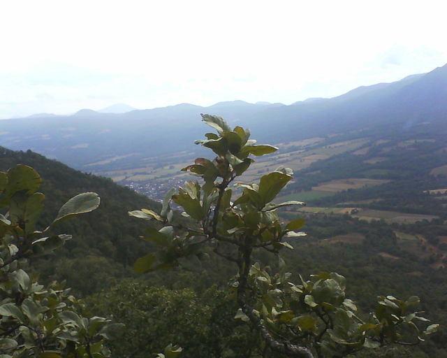 Vista desde un arbol del cerro de las tres marias en patamban