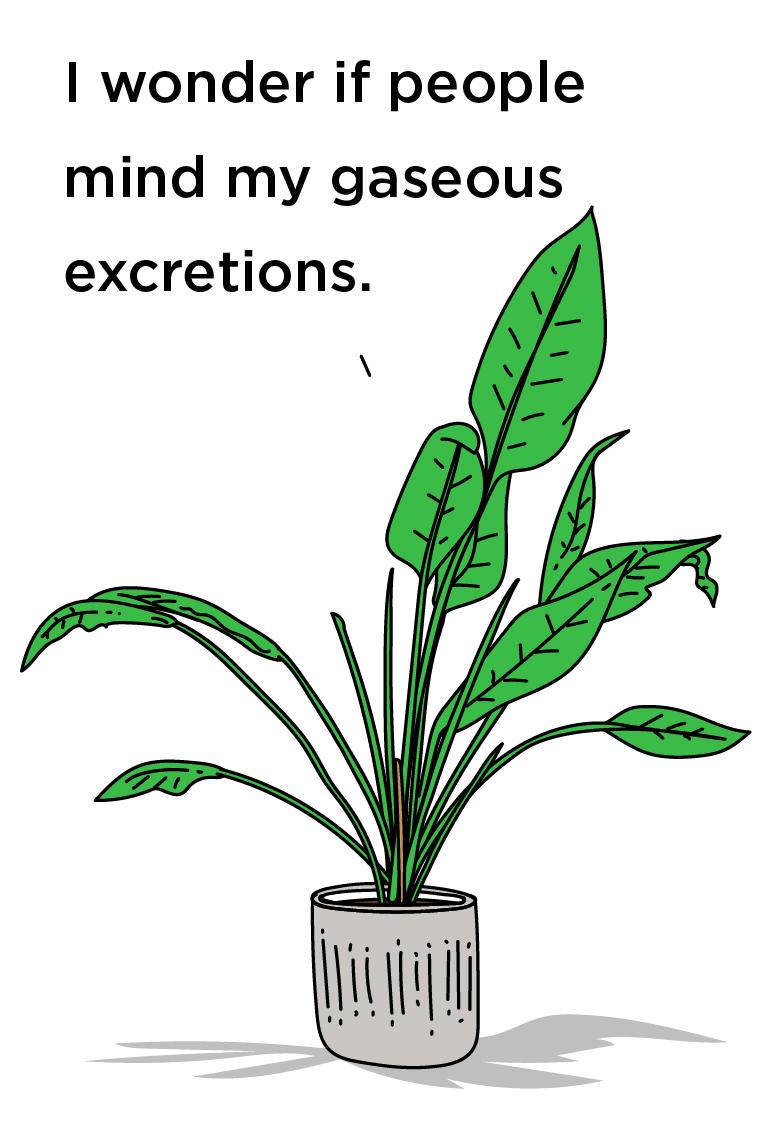 Illustration of a house plant captioned: I wonder if people mind my gaseous excretions.