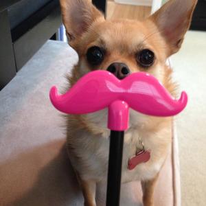 Bella moustache