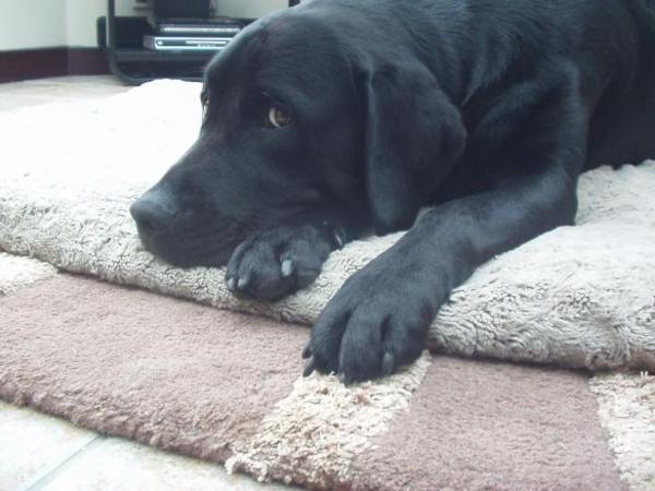 Brody Bear! - aged 2