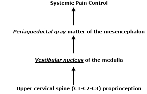 Pain, anywhere in the body, is controlled by the periaqueductal gray (PAG) matter of the mesencephalon (the midbrain, at the top of the brainstem).     A major contributor to the periaqueductal gray matter is the vestibular nucleus (VN) of the medulla (the bottom of the brainstem).     The vestibular nucleus is also critically involved in posture control.     A major contributor to the vestibular nucleus is the proprioceptive neurology from the upper cervical spine, specifically from C1-C2-C3. This proprioception arises form neck muscle spindles, ligaments, and joint capsules.