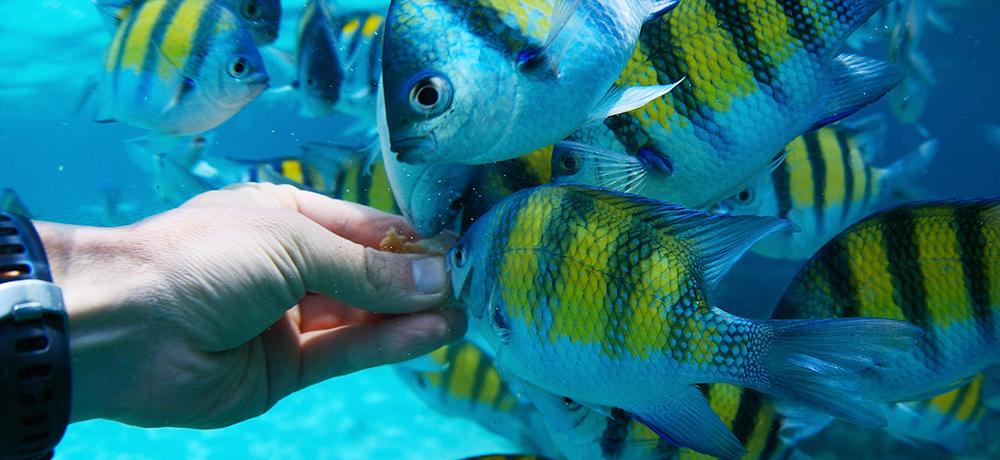 GoPro Footage Feeding Fish