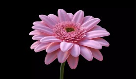Modeling a Photorealistic Flower in Cinema 4D