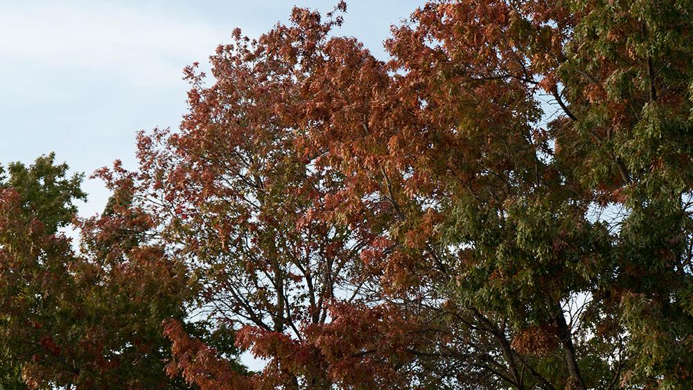 Tree A7S II
