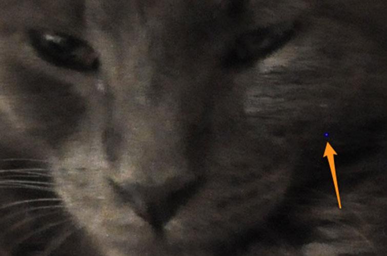 HOT PIXEL CAT EXAMPLE