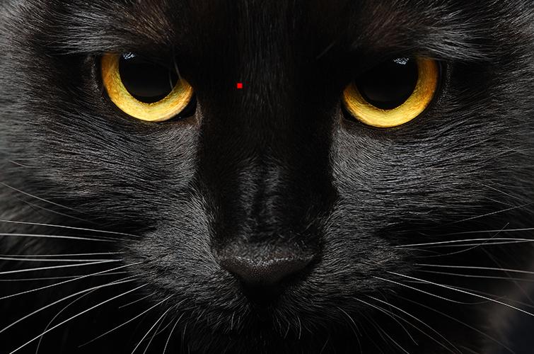 NEW-HOT-PIXEL-CAT