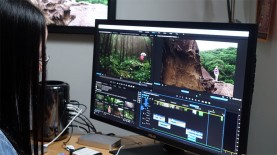 NAB 2016: Adobe News and Announcements