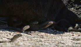 Iguana vs. Snakes: Behind-the-Scenes 360 Video