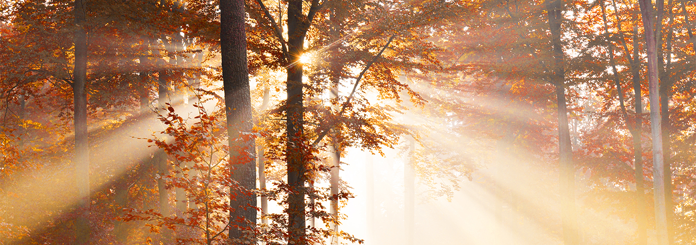 Royalty Free Soul Searching Sound for Fall Videos — Autumn Forest
