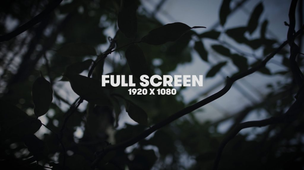 Choosing the Best Aspect Ratio for Your Video — Full Screen