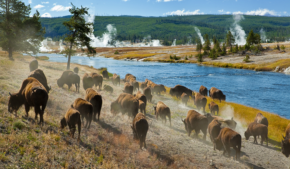 Download Dozens of Free Sound Effects from Yellowstone National Park