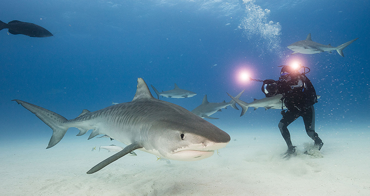 "Insights into the Cinematography of the Award-Winning Doc-Series ""Tales By Light"" — Abraham Joffe ACS shark cinematography"