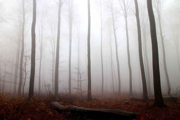 How to Get The Best Results When Filming In Natural Fog