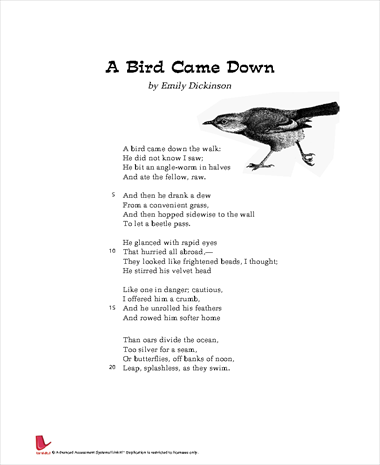 A Bird Came Down
