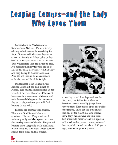 Leaping Lemurs - and the Lady Who Loves Them