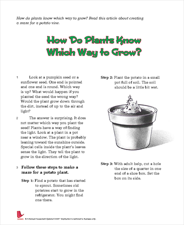 How Do Plants Know Which Way to Grow?