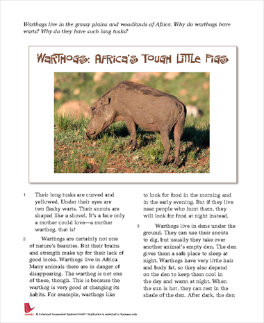 Warthogs: Africa's Tough Little Pigs