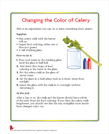 Changing the Color of Celery