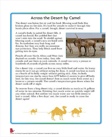 Across the Desert by Camel