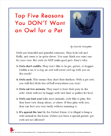 Top Five Reasons You DONT Want an Owl for a Pet