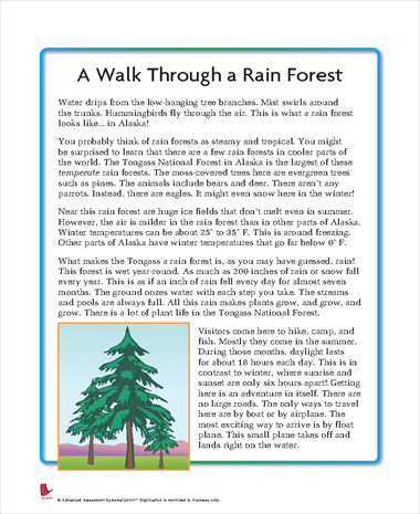 A Walk Through the Rainforest