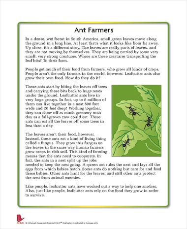 Ant Farmers