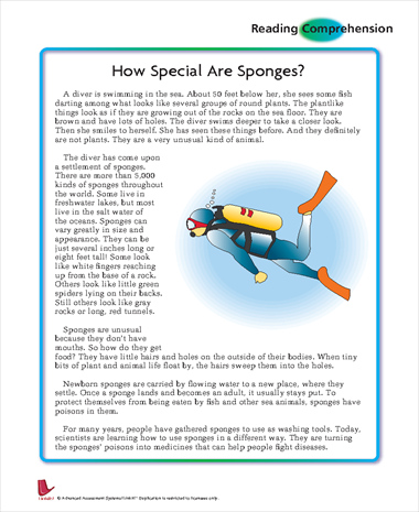 How Special are Sponges