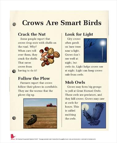 Crows are Smart Birds