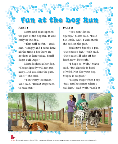 Fun at the Dog Run