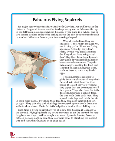 Fabulous Flying Squirrels