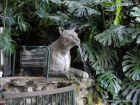 Fuente del Puma - Parque Salus