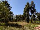 Terrenos Terreno en calle Leonardo Oliveira Punta del Diablo