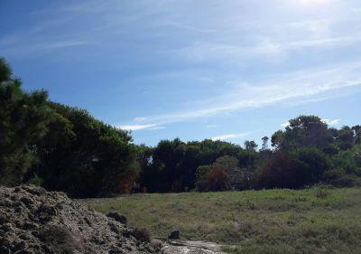 Terreno M98 S16
