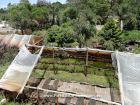 Construcción y Mantenimiento Vivero El Rincón Verde La Paloma