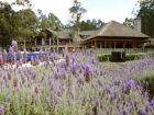 Resort Four Seasons Resort Carmelo Carmelo