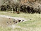 Paseos y Actividades Reserva de Fauna, Carmelo - Colonia Colonia