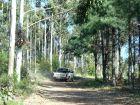 Tramo de ingreso - Camino por el monte de Pinos y Eucaliptos