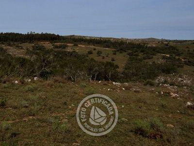 Terreno 1 hectárea (10000 m2)