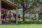 Inmobiliaria Surmontes - Punta del Diablo