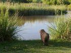 Paseos y Actividades Indígena -  Area Protegida de Flora y Fauna Bella Vista