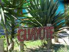 Guayote - Punta del Diablo