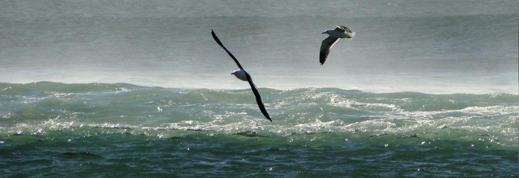 Naturaleza en Cabo Polonio