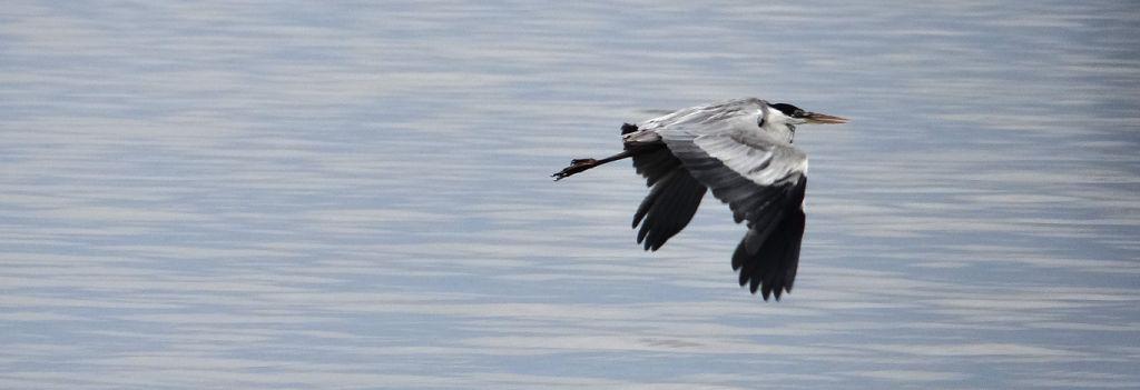 Avistamiento de aves - Fauna y Flora en Laguna de Rocha