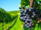 Tip Bodegas en Carmelo: La ruta del vino Carmelo