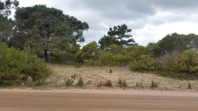 Terrenos Terrenos 1 y 2 M 203 Punta del Diablo