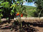 Talleres de Permacultura -  Octógono Om Shanti Villa Serrana