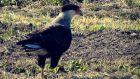 Outdoor activities Barra del Chuy: fauna marina y aves Rocha