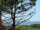 Mar Gordo - Camarón - Punta del Diablo